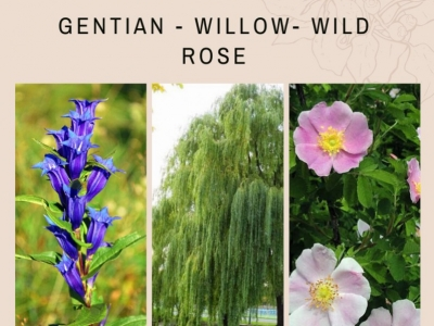 BINARIO Gentian - Willow - Wild Rose [Meridiano S]